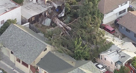 Updated: Strong winds knock tree down onto Boyle Heights home
