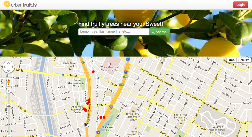 Screenshot image of website development. Courtesy of Luis Sierra Campos