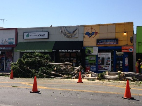 Massive tree cutting on First Street part of streetscape improvement