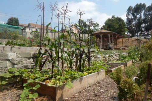 Community Gardening Takes Off in Boyle Heights