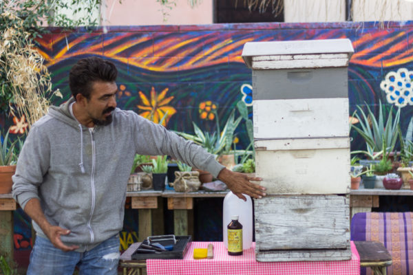 New city ordinance hopes to bring back bees to Boyle Heights backyards